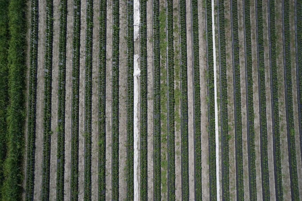 Strawberry Fields from the air…